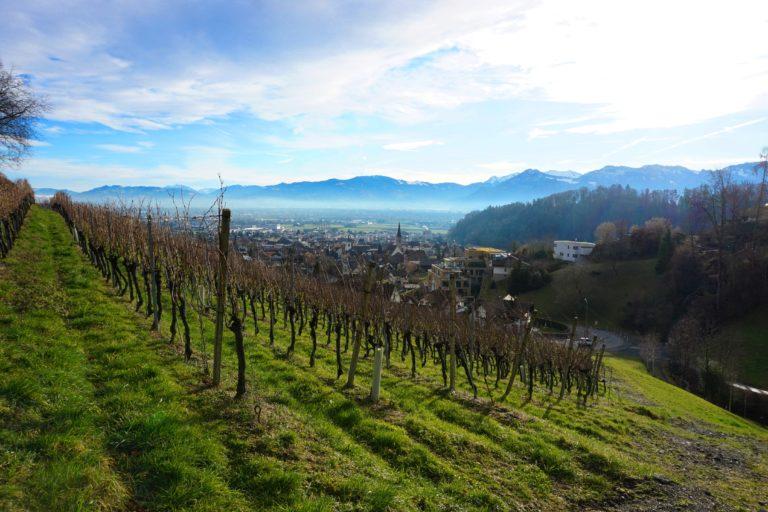 Weinberge oberhalb Berneck